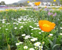 ハウステンボスの花