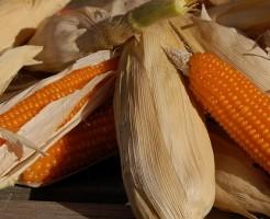 遺伝子組み換え作物