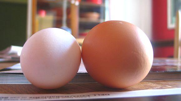 白卵と赤卵