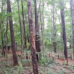 岩手県で最高に美味いジェラート屋さん 森林散策のおまけ付き