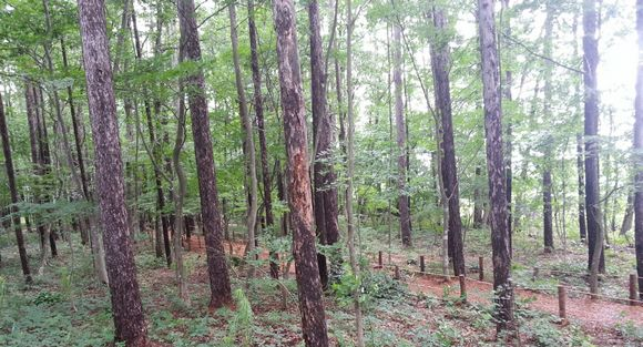 松ぼっくりジェラート森林