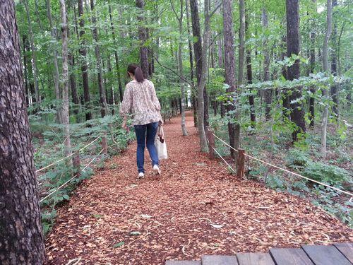 小さなカラマツの森 絨毯