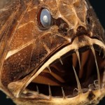 水族館の深海魚は水圧かかってるかの謎