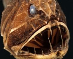 深海魚圧1