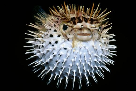 深海魚水槽