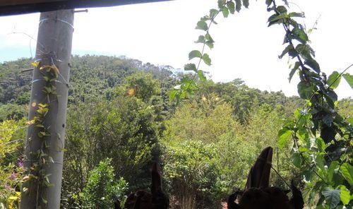 森のふくろうの窓