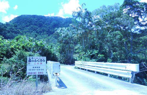 森のふくろう道路2