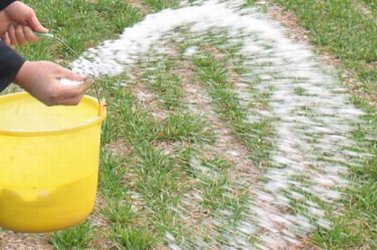 中国の畑は化学肥料多い