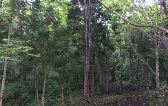 ゆこたんの森散策路