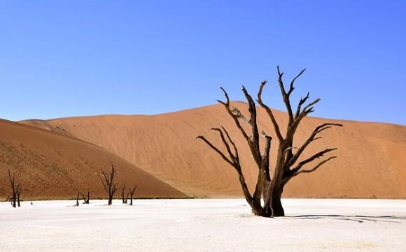 砂漠農業が可能の魔法の砂パナサンド