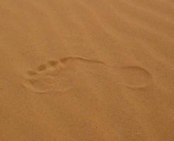 魔法の砂・パナサンド
