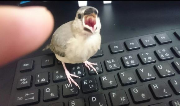 文鳥の機嫌