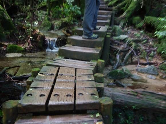 縄文杉トレッキング急なところ2