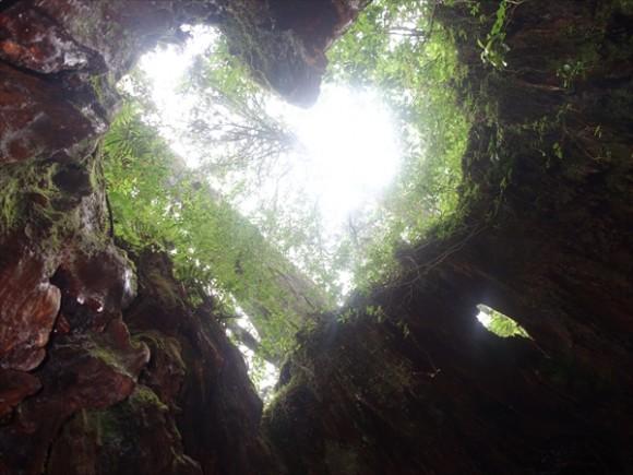 縄文杉トレッキング風景4