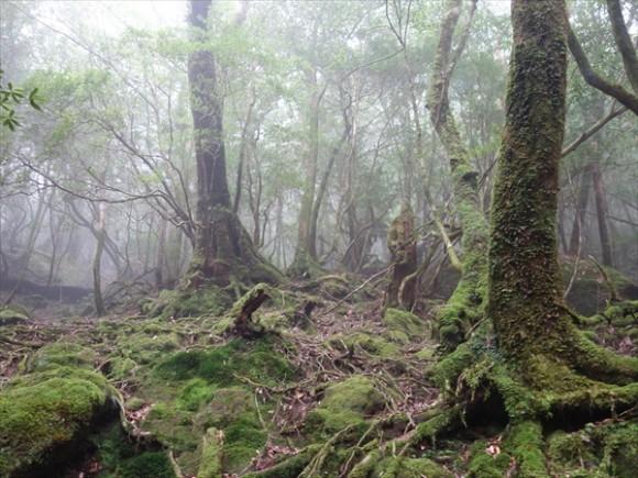 白谷雲水峡トレッキング風景2