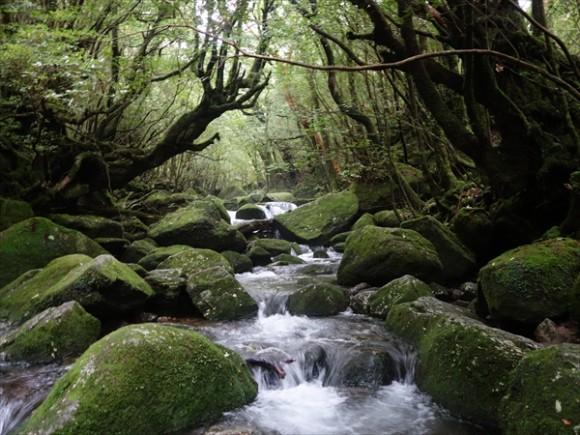 白谷雲水峡トレッキング風景9
