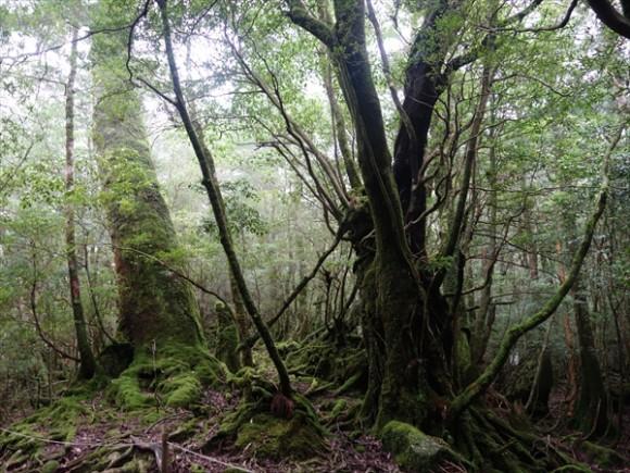 白谷雲水峡トレッキング風景10