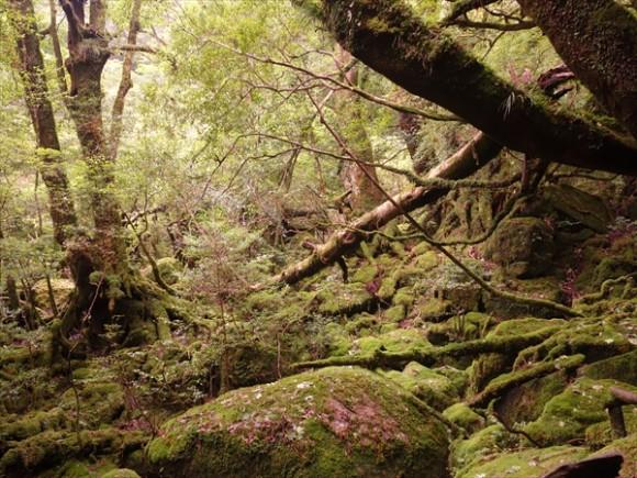 白谷雲水峡トレッキング風景12