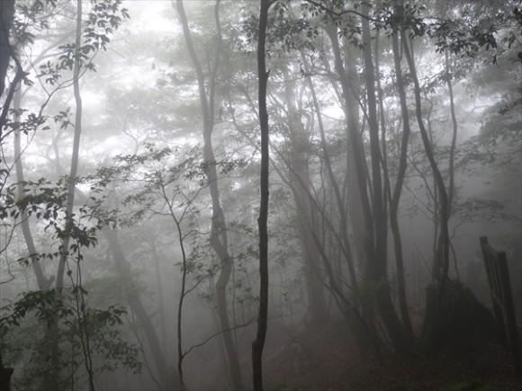 白谷雲水峡白谷雲水峡トレッキング風景13