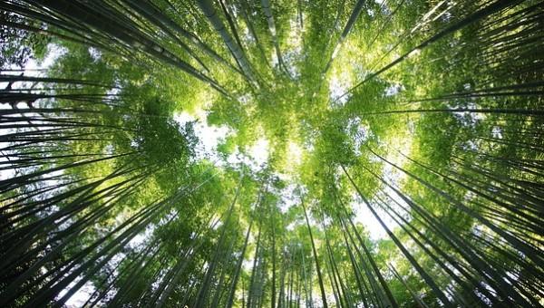 岩手切炭はナラの木でエコリサイクル