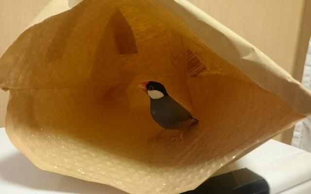文鳥の湿度管理