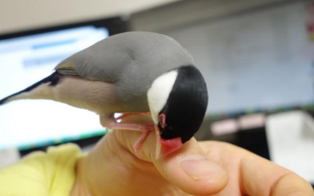 文鳥の飼育に湿度管理が大切な理由
