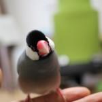 文鳥2羽目を飼おうか悩んでいる、飼うとどうなるか