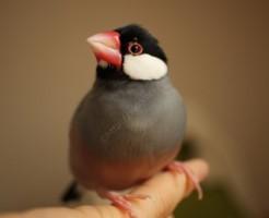 文鳥事故後の確認と対処