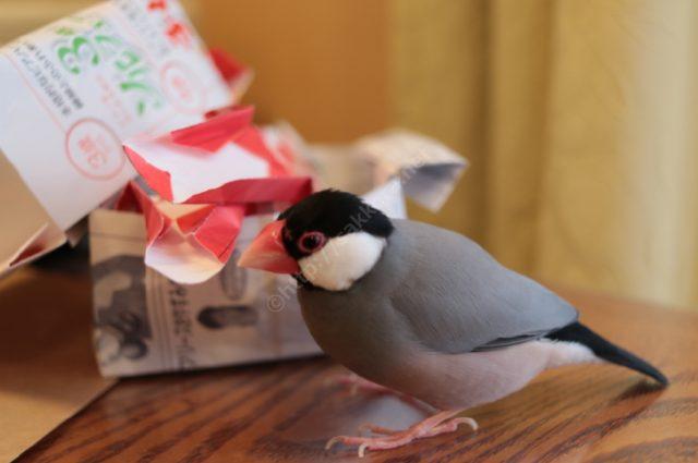 文鳥Ferplast(ファープラスト)の鳥かご