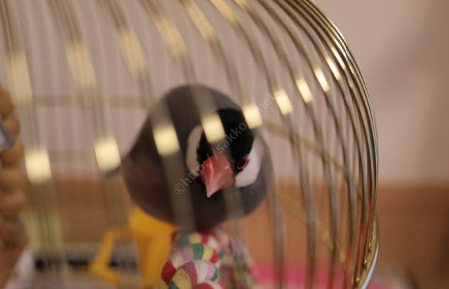Ferplast(ファープラスト)文鳥かご3
