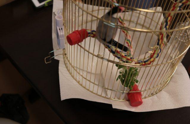 Ferplast(ファープラスト)文鳥かご12