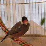 Ferplast(ファープラスト)の鳥かごで毎朝文鳥のフン掃除の手間から解放された話