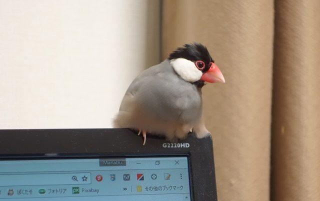 カメラに写った文鳥とインコ