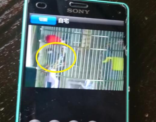 外出中にネットで留守中の文鳥インコを監視